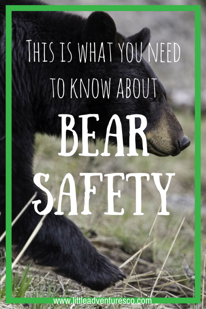 This is what you need to know about bear safety!