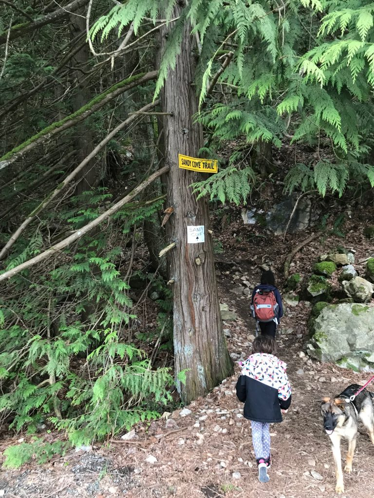 sandy cove trail harrison hot springs trailhead