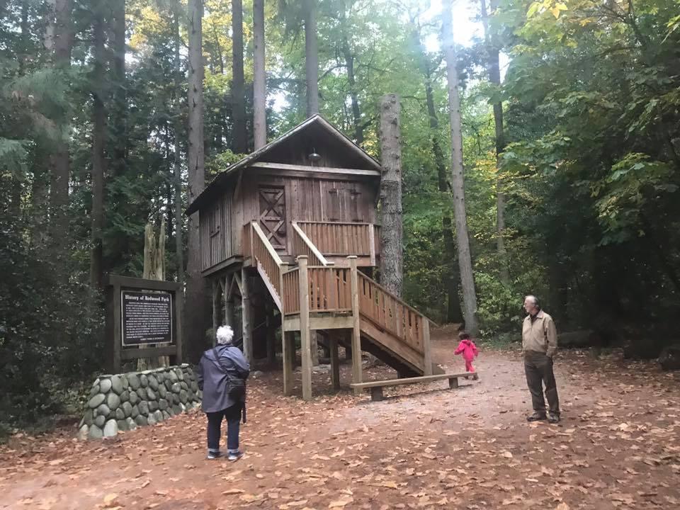 redwood park cabin