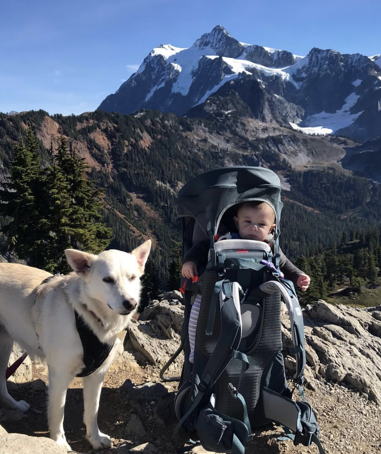 how to take your kids and dog hiking