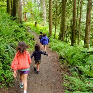chilliwack community forest
