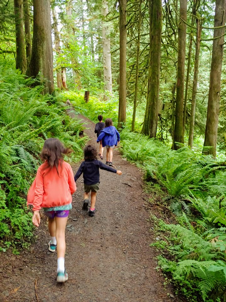 chilliwack community forest trail