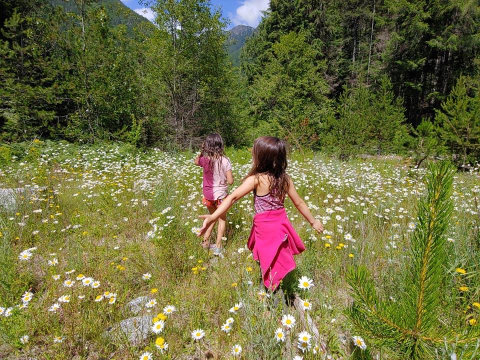 bosumarne daisies