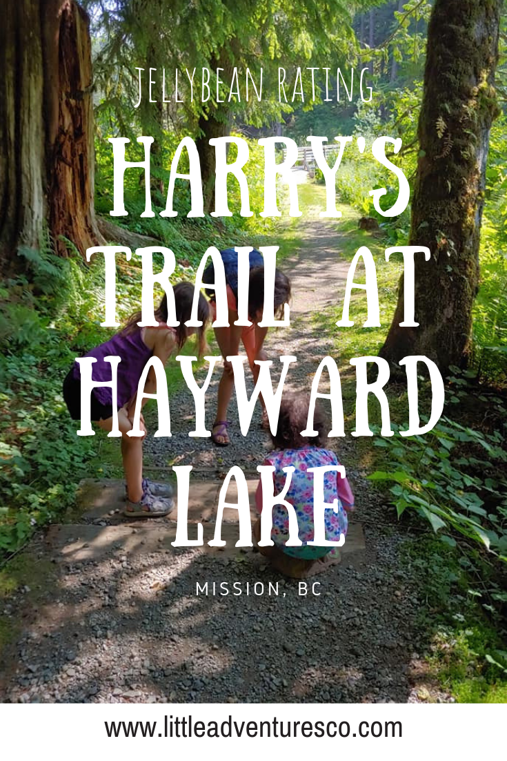 Harry's Trail at Hayward Lake brings you to the main beach or the off leash dog area! It's a great chance to get a little hike in before a day at the beach!